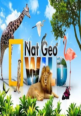 National Geographic Wild Belgesel İzle 9 Belgesel