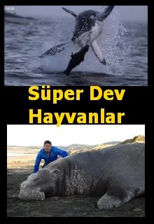 Süper Dev Hayvanlar belgesel izle