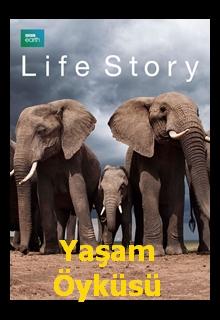 BBC Life Story  Yaşam Öyküsü  belgesel izle
