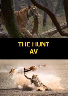 Av | The Hunt | Full HD 1080p | Belgesel | Tüm Bölümler |