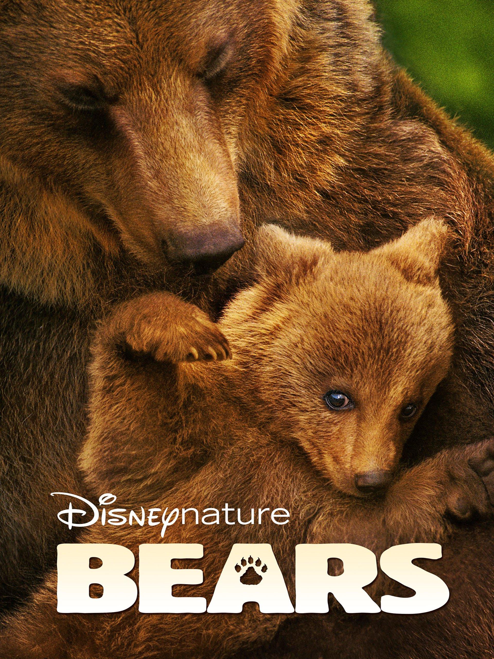 Bears  | Ayılar |
