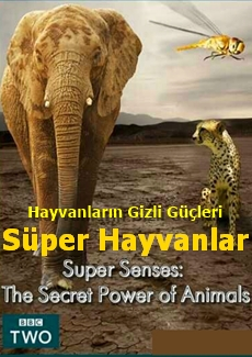 Süper Hayvanlar