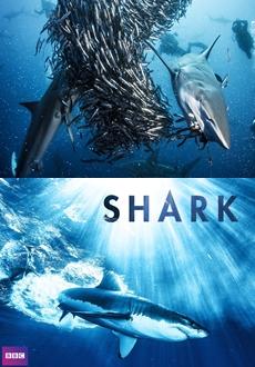 BBC   Shark   Köpek Balıkları   Full HD 1080p  