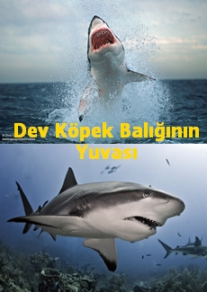 Dev Köpek Balığının Yuvası