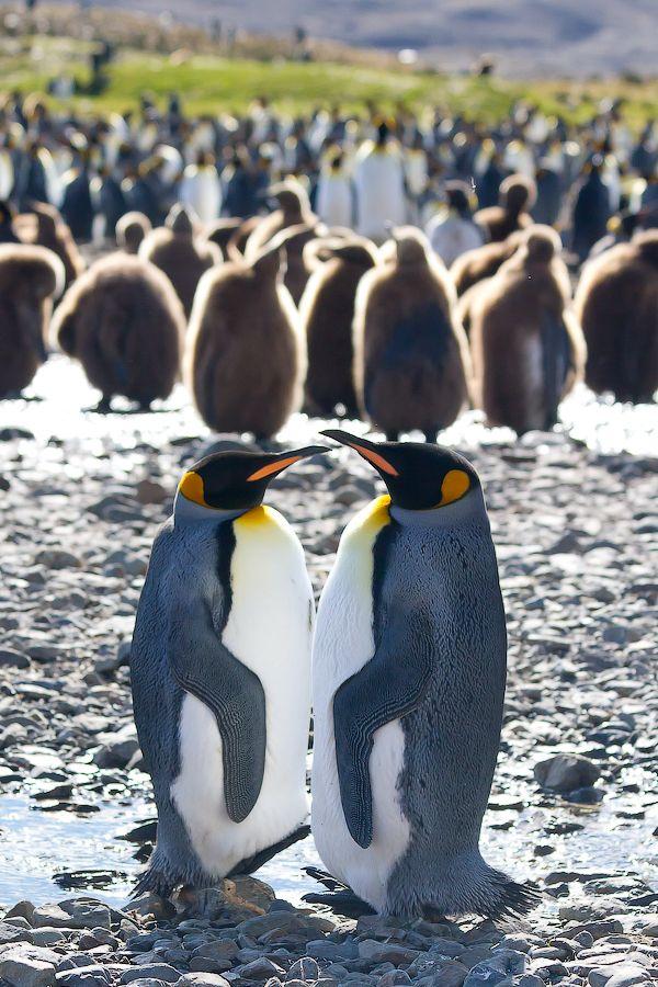 Bir Penguenin Yaşamı – A Penguins Life